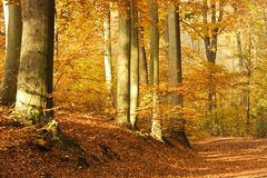 Forest autumn path Royalty Free Stock Images