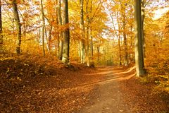 Forest autumn path Royalty Free Stock Photos