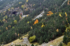Forest in autumn. A Pyrenean forest in the autumn, Queralbs (Eastern Pyrenees), Girona, Catalonia Stock Photography