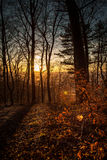 Forest in autumn with red foliage Stock Photography