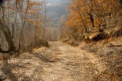 Forest autumn road Stock Photos