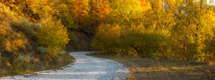 Forest autumn road Royalty Free Stock Photos