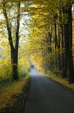 Forest autumn road. Autumn country road with forest besides royalty free stock photo