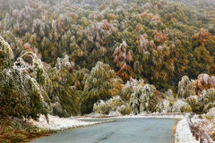 Forest in autumn. Forest road in Stara Planina mountain Stock Image