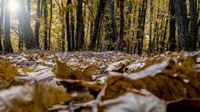 Forest Autumn Scene Images stock