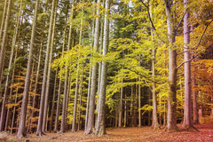 Forest Autumn Scene Royalty Free Stock Images