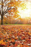 Forest during autumn season Royalty Free Stock Photography