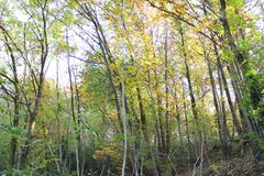 Beautiful view of forest autumn trees. Forest autumn season view and yellow leafs of trees Royalty Free Stock Images