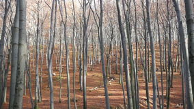 Forest in Autumn stock video footage