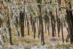 Forest in autumn. In Stara Planina mountain Stock Photos