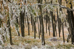Forest in autumn. In Stara Planina mountain in Bugaria stock photos