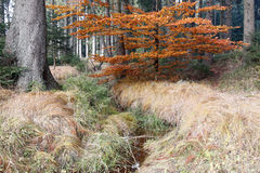 Forest autumn still life with the streamlet Royalty Free Stock Photo