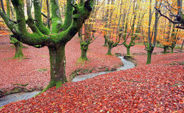 Forest in autumn with a stream stock photo