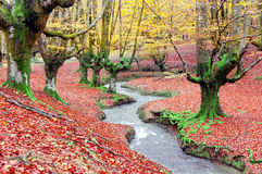 Forest in autumn with a stream Stock Photography