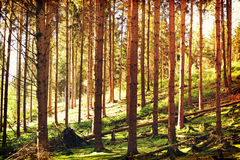 Forest in autumn. Stock Images