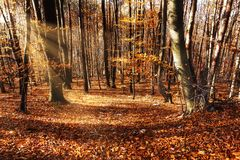 Forest In Autumn With Sunbeam royalty-vrije stock afbeelding