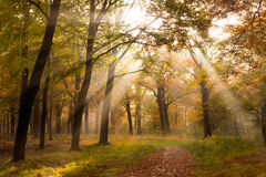Forest Autumn Stock Images