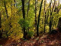 Forest in autumn time Stock Photo