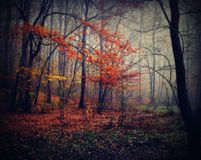 Forest. Autumn time in forest with yellow and orange coloured leaves Royalty Free Stock Photography