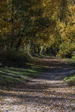 Forest in autumn Royalty Free Stock Photo