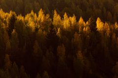 Forest of autumn trees. Aerial view of forest of autumn trees with shadows in foreground stock photos