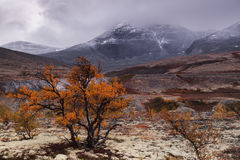 Forest in the autumn in the valley among the mountains. Red forest in the autumn in the valley among the mountains, landscape, Norway royalty free stock photo