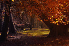 The Forest in Autumn Royalty Free Stock Images