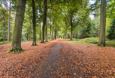 Forest in autumnal colors Stock Images