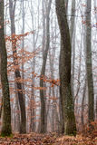 Forest at the autumntime Royalty Free Stock Photos