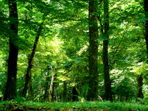 Forest, Azerbaijan. Summer days, Nabran, walking in forest, everywhere green, freah air Royalty Free Stock Image