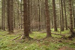 Forest Azuga Arkivbild