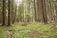 Forest Azuga Image libre de droits