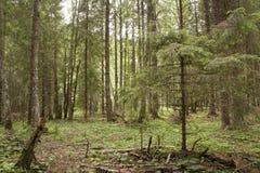 Forest Azuga Royaltyfria Bilder