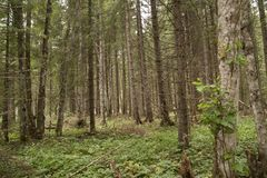 Forest Azuga Royaltyfri Fotografi