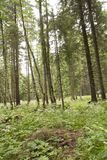 Forest Azuga Arkivfoton
