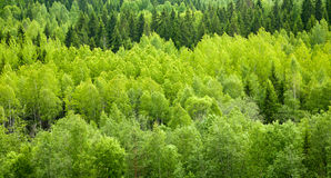 Forest background. Dense mixed forest panoramic view royalty free stock image