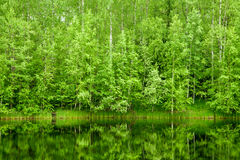Forest background Stock Images