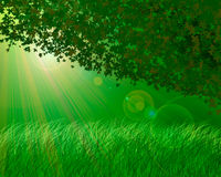 Forest background Royalty Free Stock Photography