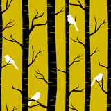 Forest Background abstracto Fotos de archivo libres de regalías