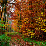 Forest background in autumn 03 Royalty Free Stock Photography