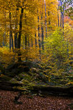 Forest background in autumn Royalty Free Stock Photography