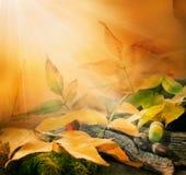 Forest background. Autumn border design Stock Photos
