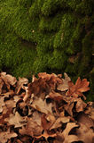 Forest background in autumn Stock Photo