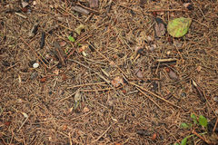 Forest background. Autumn leaves, tree needles, wood chips  in forest Stock Image
