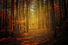 Forest background during fall season Stock Photos
