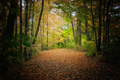 Forest background during fall season Stock Images