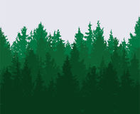 Forest background. green spring woods, nature landscape. vector  Royalty Free Stock Image