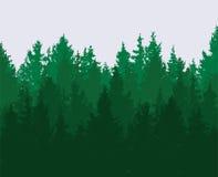 Forest background. green spring woods, nature landscape. vector. Forest background. green spring woods, nature landscape with evergreen coniferous trees. morning vector illustration