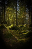 Forest background Stock Photos
