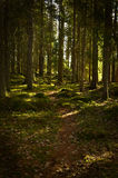 Forest background Stock Photo
